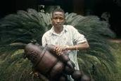 Koffi Kouakou's picture