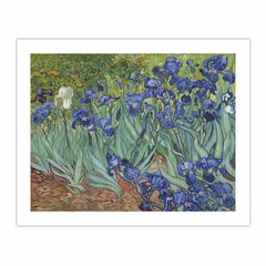 Irises (8×10)