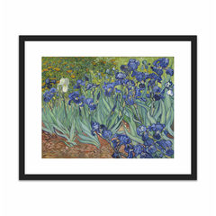 Irises (16×20)